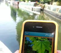 Can you help keep wildlife 'app-y'?