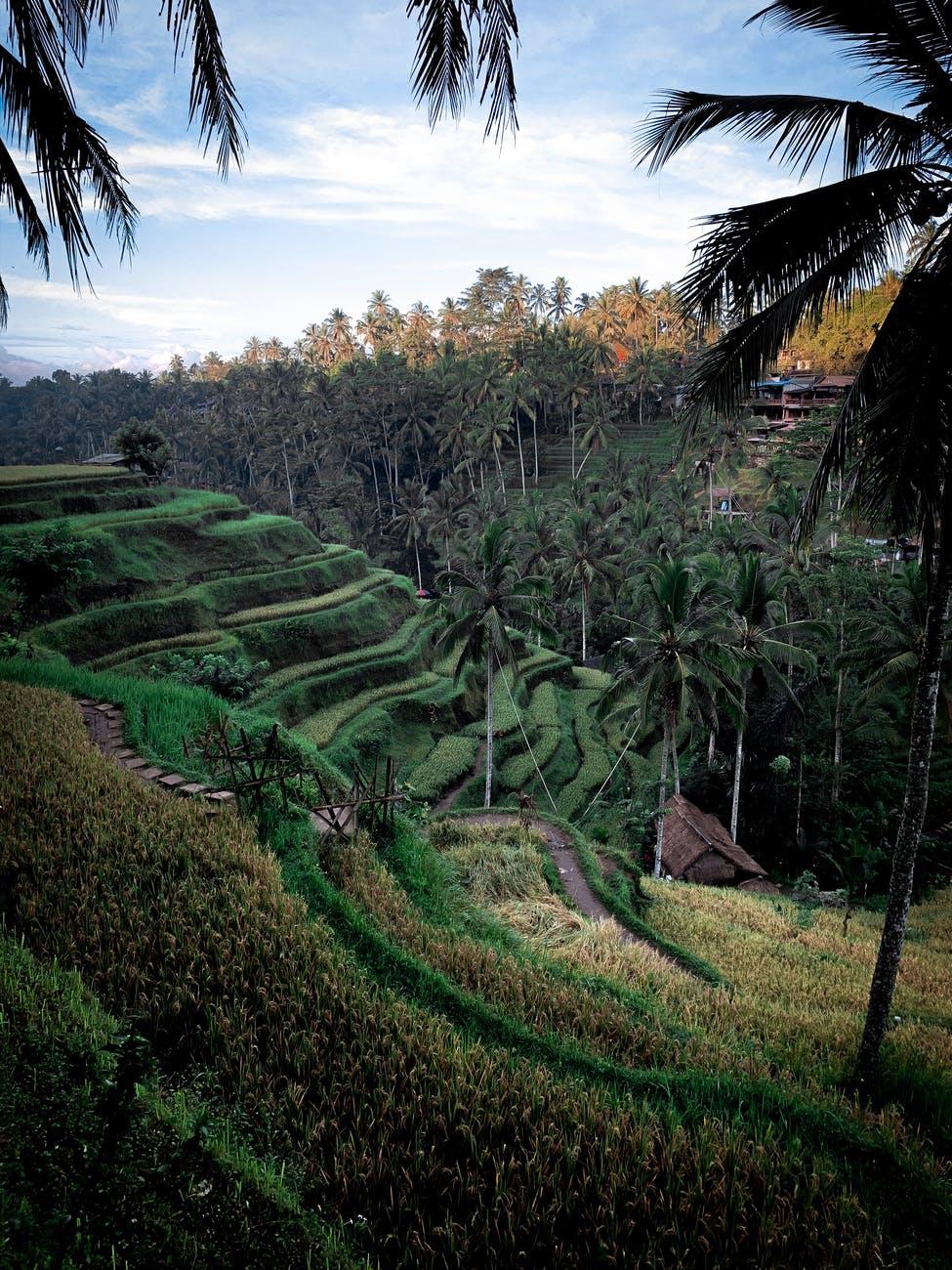 Bali Neighborhood - Ubud