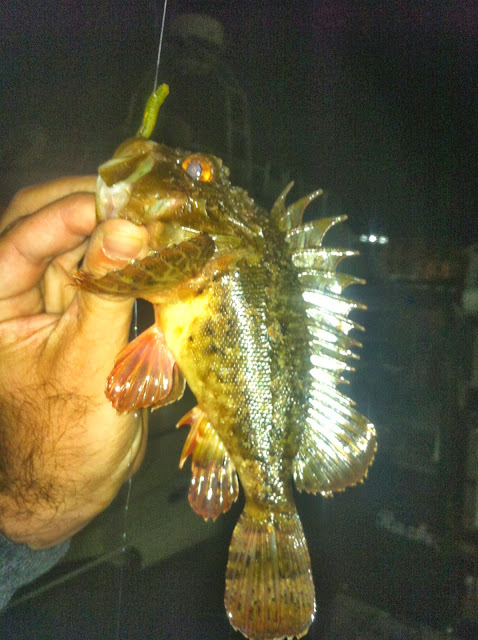 Rock fishing en mediterranee comme au bon vieux temps for Bon tempe lake fishing