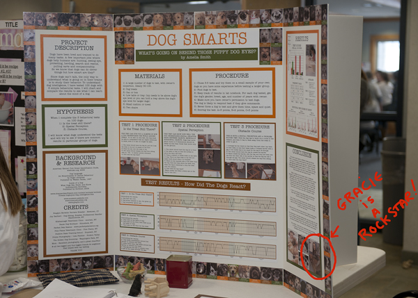 dog science fair projects Animals are great subjects for science fair projects, particularly if you have a pet or an interest in zoology do you want to do a science fair project with your pet.