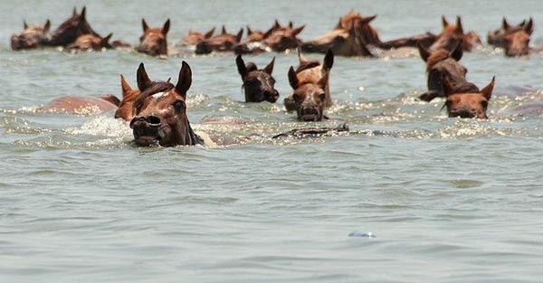 Chuyện tiền thân năm ngựa: Nước tắm dơ bẩn
