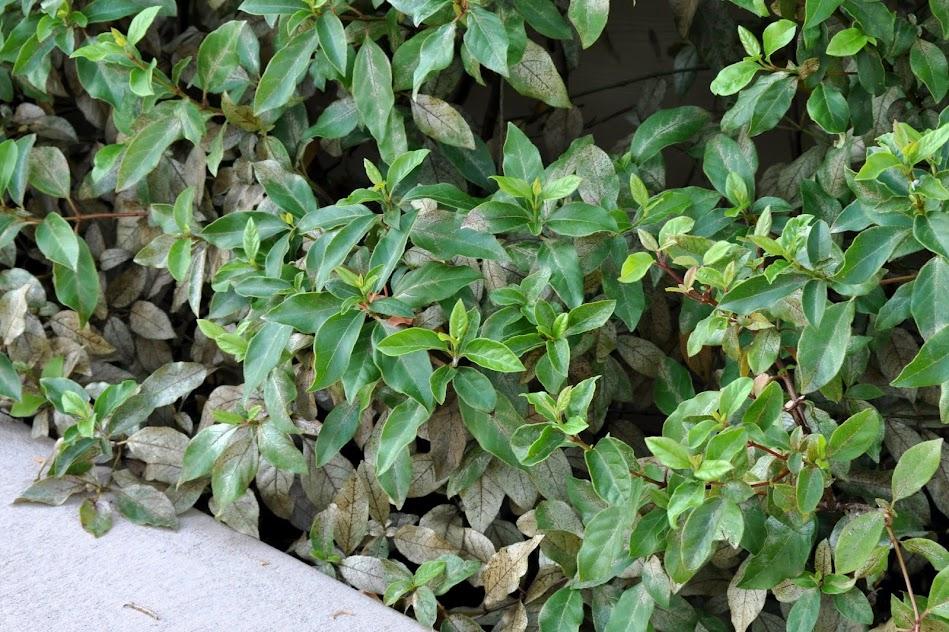 Plant Damage