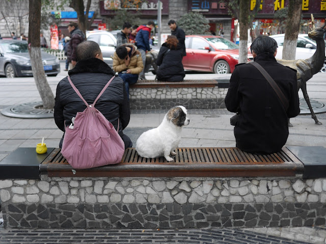dog sitting between two men on a bench
