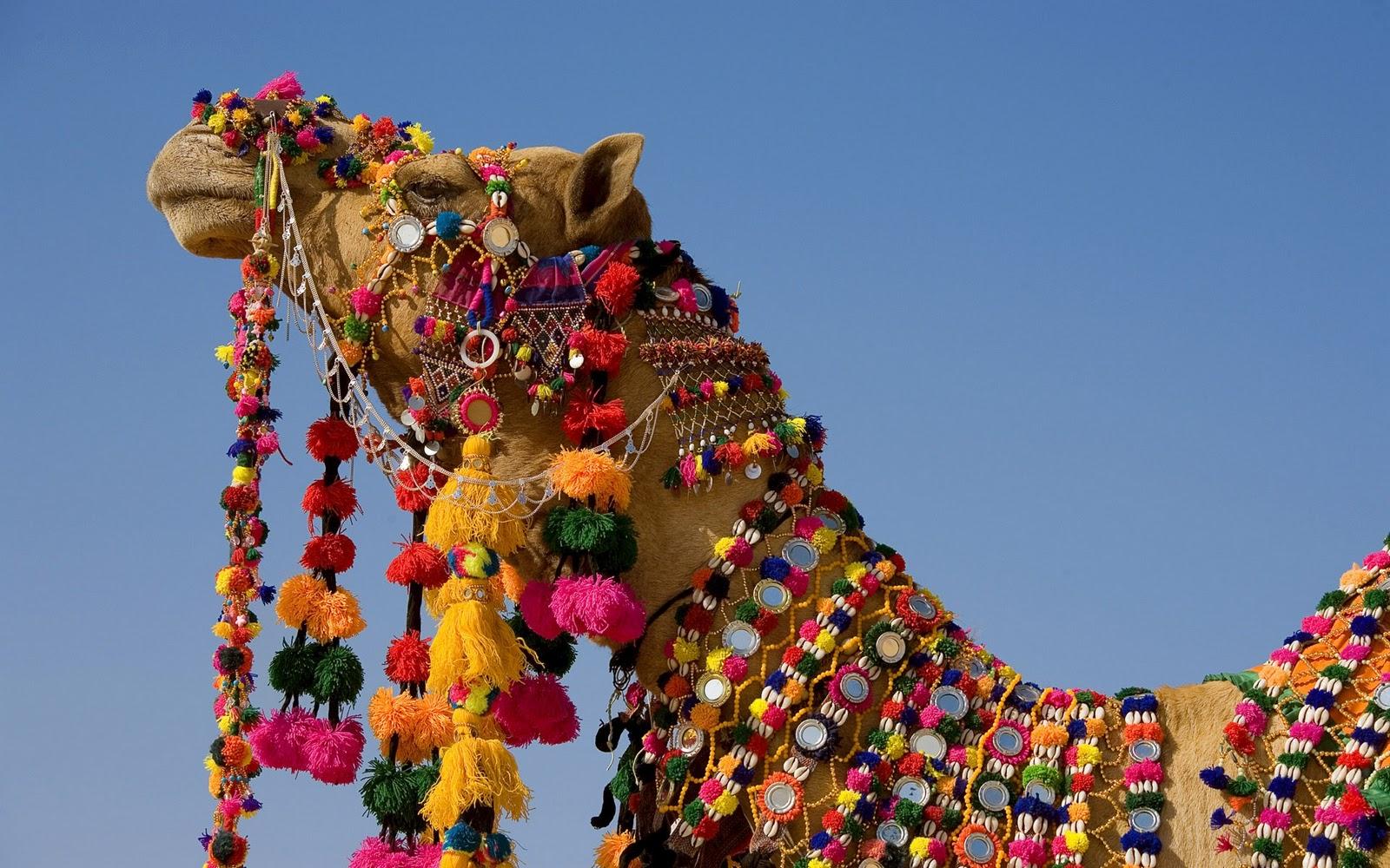 Amber Interior Design Camel Tassels