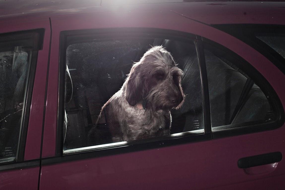 *被鎖在車內沉默的狗:攝影師Martin Usborne 黑暗呈現! 6