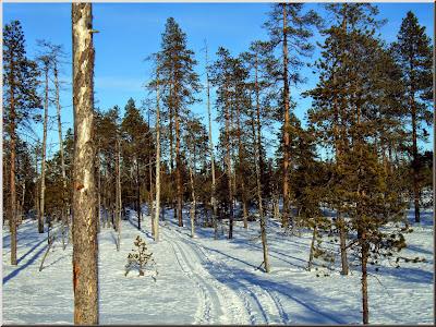 150214 Solskensspåret genom skogen