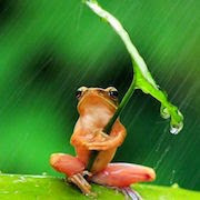 К чему снится, как прыгает лягушка?
