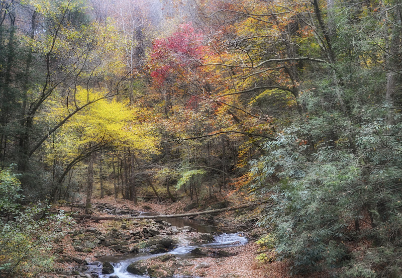 fall in the Smoky Mountains; Nikon D7000