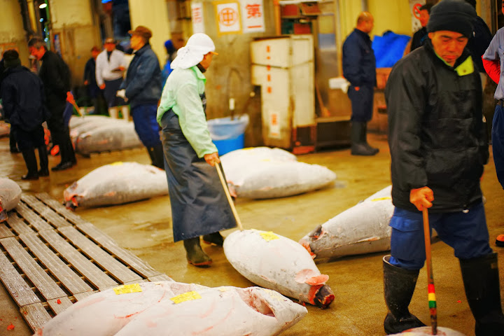 carrying tuna with hook tsukiji fish market