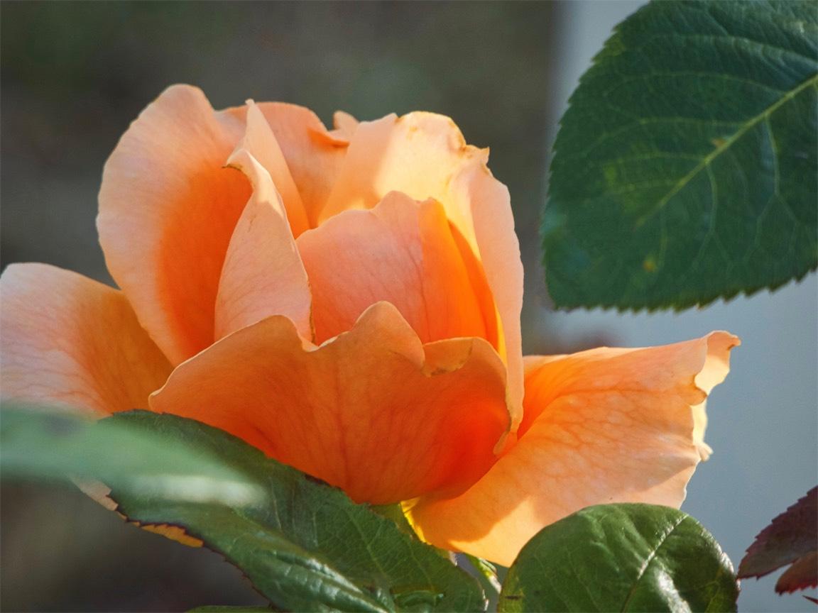 Tangerine No Rust.jpg