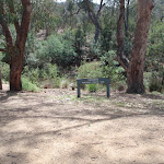 Walking track from Jacobs River Camping Area
