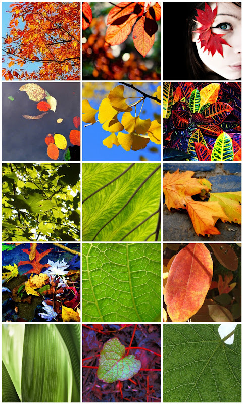 Leaf Photo Collage