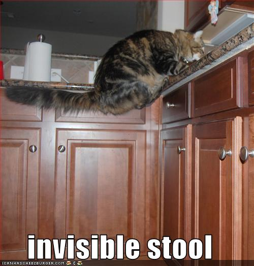 LOLcats - invisible object