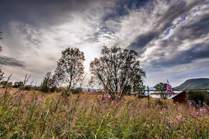 Summer in Vesterålen, Northern Norway. Photographer Benny Høynes
