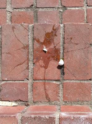 broken bird egg brick walkway stock photo