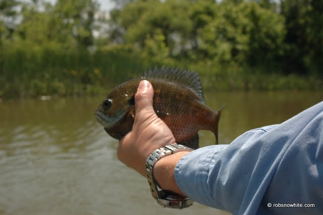 tpfr miles with bluegill