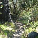 The Wonderland Bushtrack (10652)