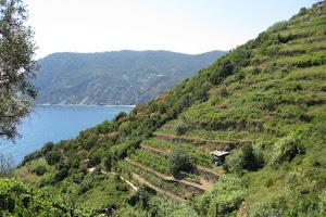 Cinque Terre Vineyards
