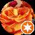 Blume NRW