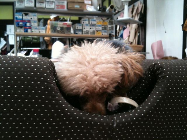 Emilie in Fur jacket for dog
