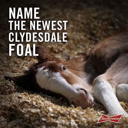Super Bowl Ad Watch: Budweiser Tweets For The First Time — Name The New Clydesdale Foal