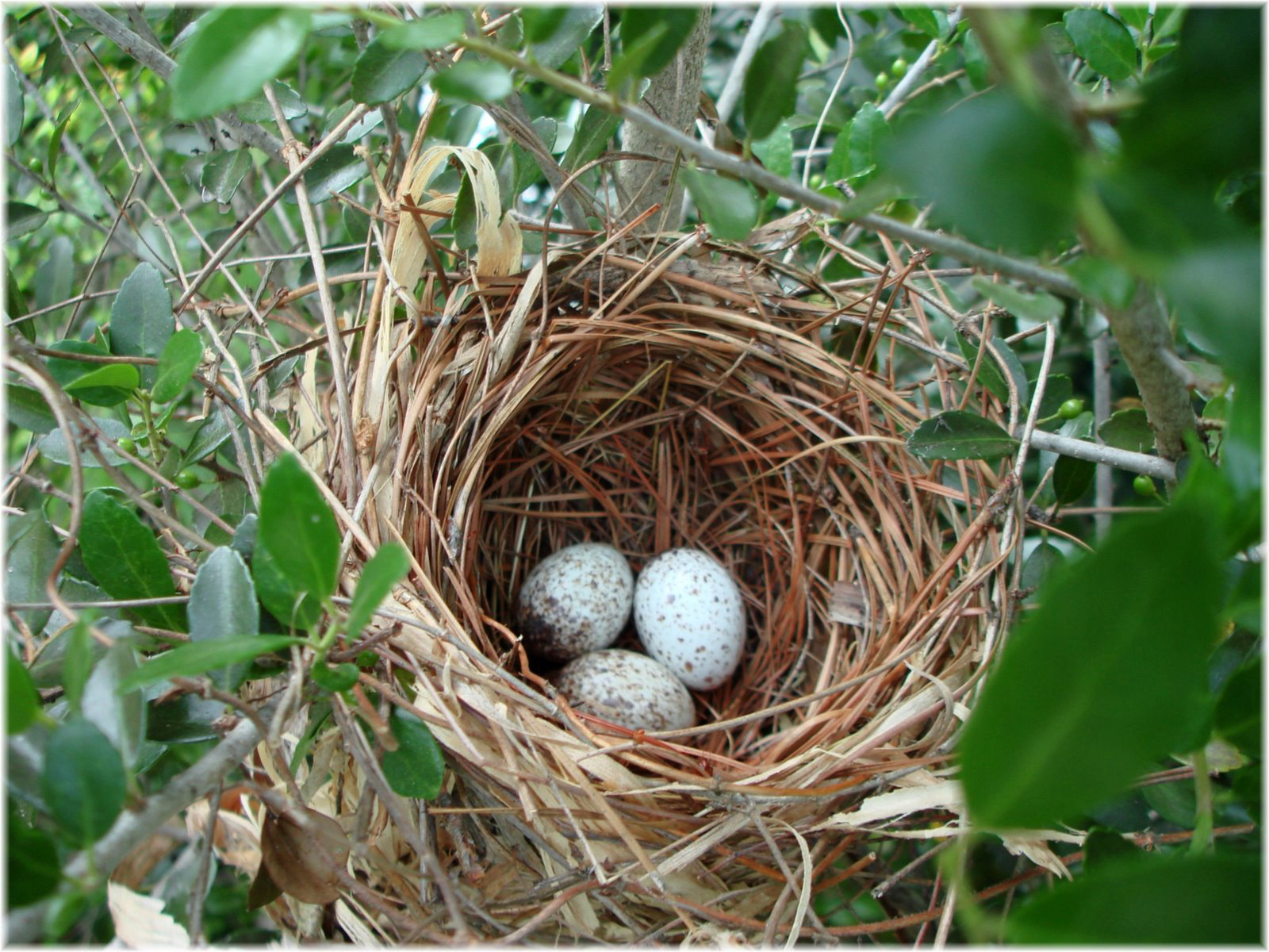 ~ The Feathered Nest ~: Nests on the brain....