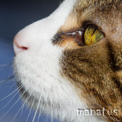 manatus foto macaco gato
