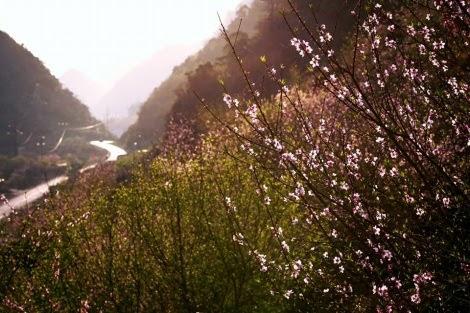 hoa dao moc chau pys travel005 Mùa hoa đào ở cao nguyên Mộc Châu
