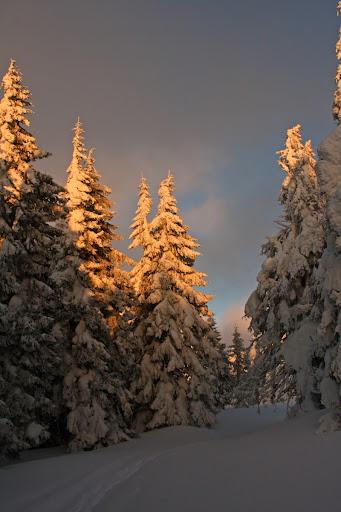 schi zăpadă Munții Vrancei Covasna soare brazi