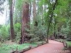 Along Redwood Loop Trail.