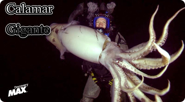 Calamar gigante [Nadando entre monstruos][Discovery Max][SATRip][Espa�ol][2013]
