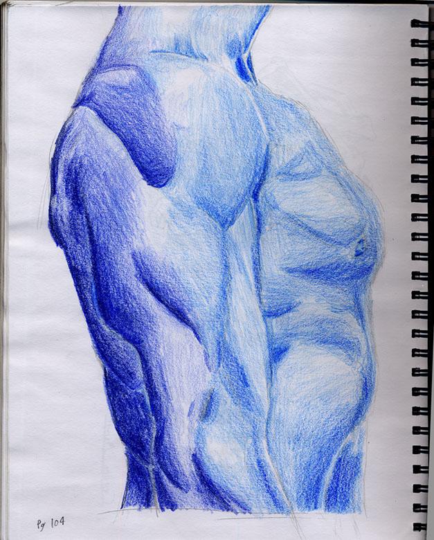 Forearm study