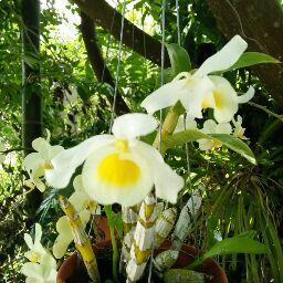 Thien Ha Photo 18