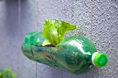 Plante a sua mini horta