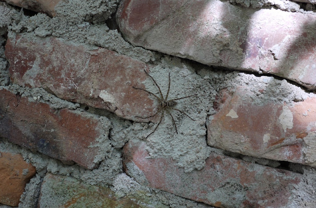 spider on brick wall in Hetoupu, Zhuhai, China