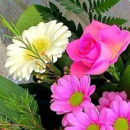 khalide web service picture