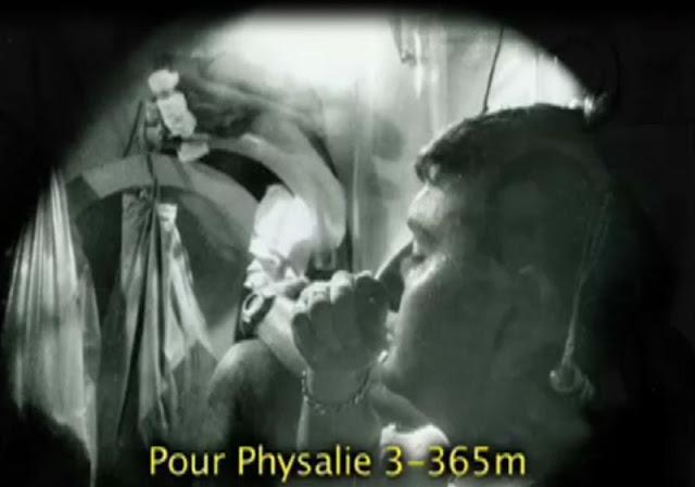 Physalie3_01.jpg
