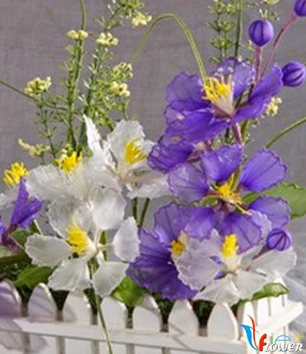 chậu hoa tường vi màu tím và trắng bằng vải voan