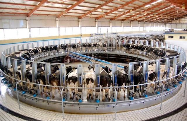 granjas ganaderia intensiva leche ecologica
