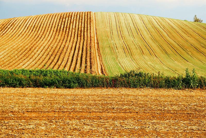 美瑛 ルベシベの丘 写真10