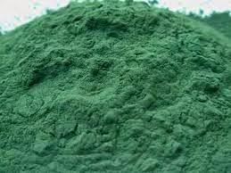 tảo xoắn nguyên chất