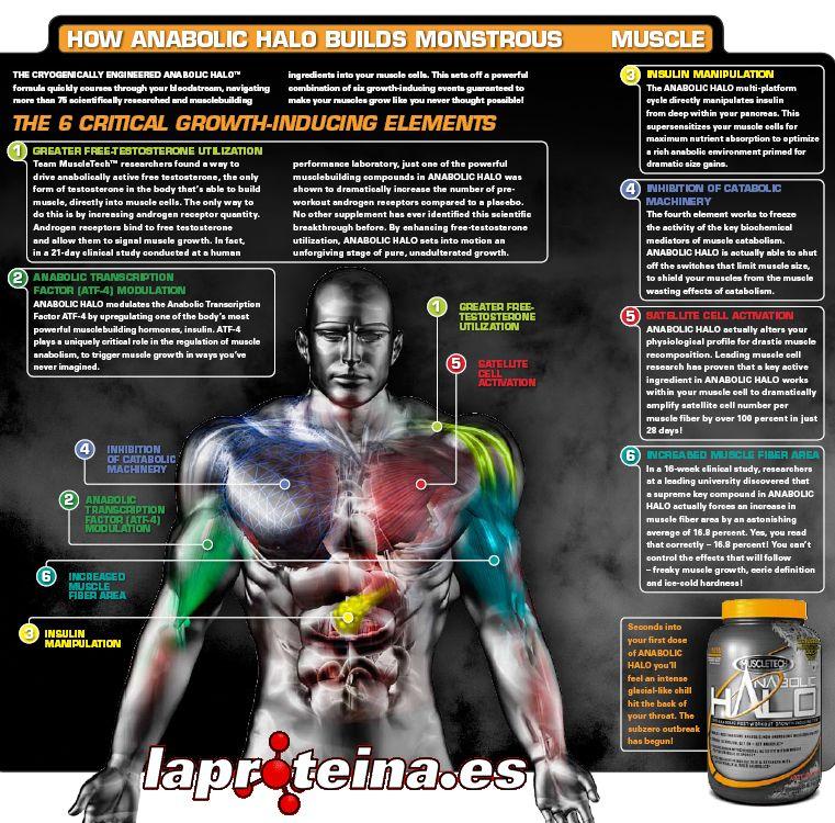 anabolic halo son esteroides