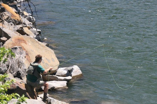 Oregon fly fishing report by larimer outfitters how to for Trouts fly fishing reports