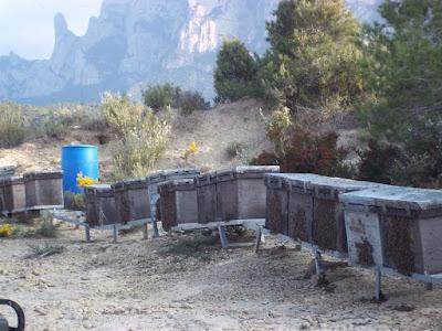 Explotació mel ecològica a la casa de vacances