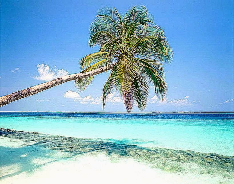 Beautiful Beach Backgrounds Palm Trees Beach Palm Tree Wallpaper Top