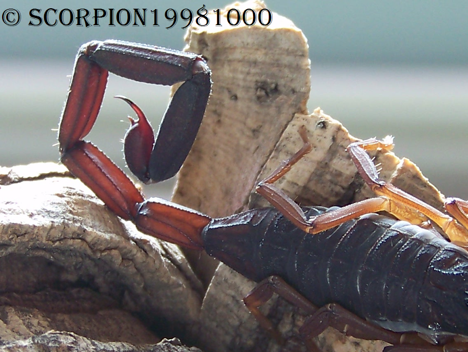 This forum is in dire need of scorpification! 10