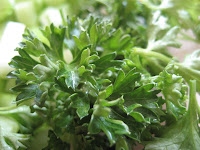 Close up view of fresh curly leaf parsley.