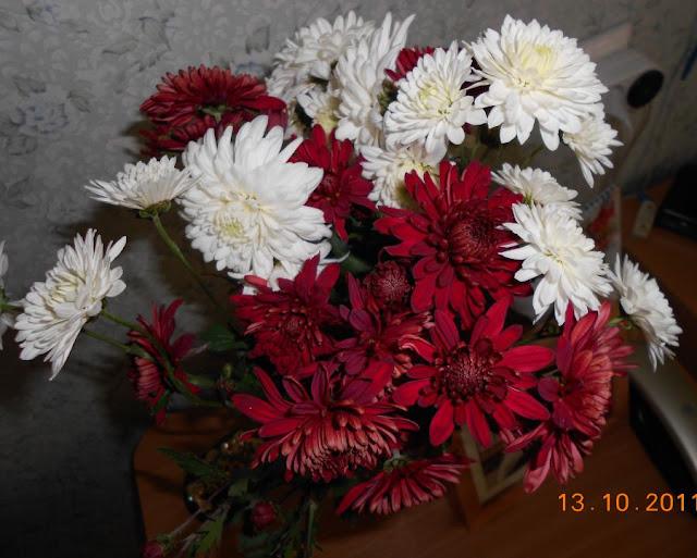 Хризантемы - королевы осени DSCN1057