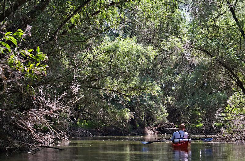 Delta Dunării Litcov Isăcel pădure apă vegetație caiac padelă