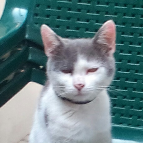 simons cat naptár Simon's Cat   Crunch Time – Alkalmazások a Google Playen simons cat naptár